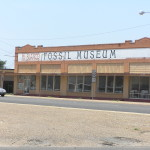 Mount Blanco Fossil Museum